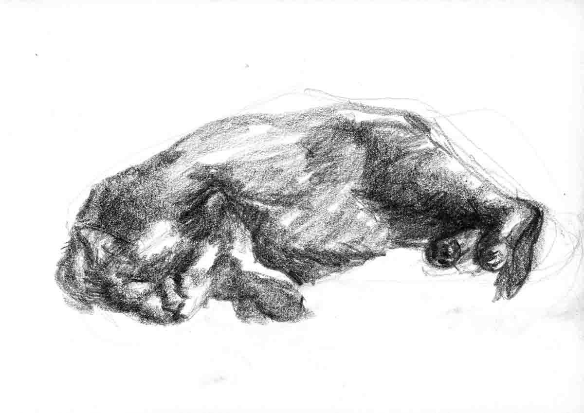 Chat endormi - 3