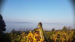 wijngaard 9