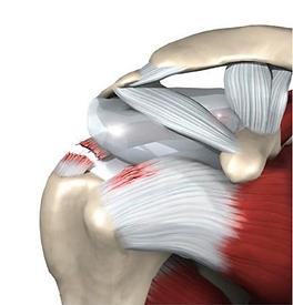 Плечо.ру-разрыв вращательной манжеты плечевого сустава. Артроскопический шов манжеты плеча