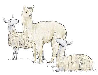 Alpacas_bluesheep.jpg