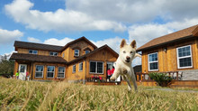 Tips for Making Moving Day a Breeze When you Have Dogs to Please