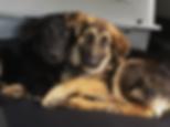 dogcuddles.png