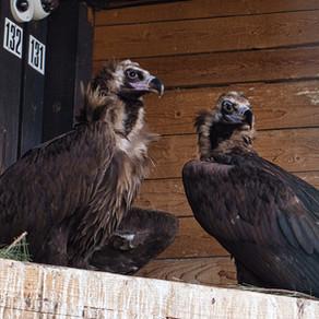 Hulpproject: Bulgarije - Wildlife Rehabilitation and Breeding Center