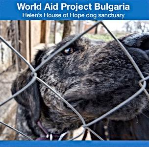 World Aid Project Bulgaria