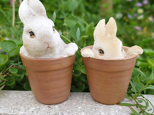 Bunnies in a pot