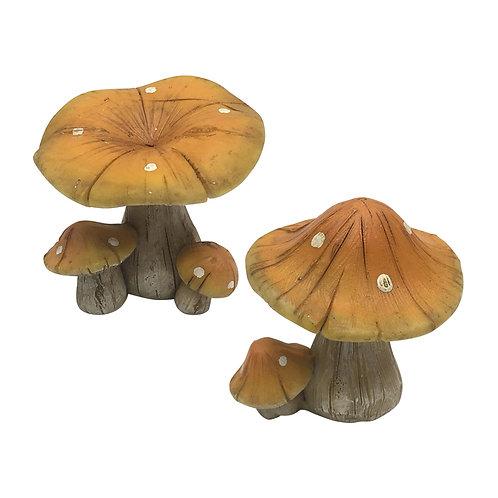 Natural mushrooms