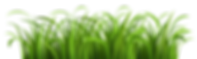 PNGPIX-COM-Grass-Vector-PNG-Transparent-