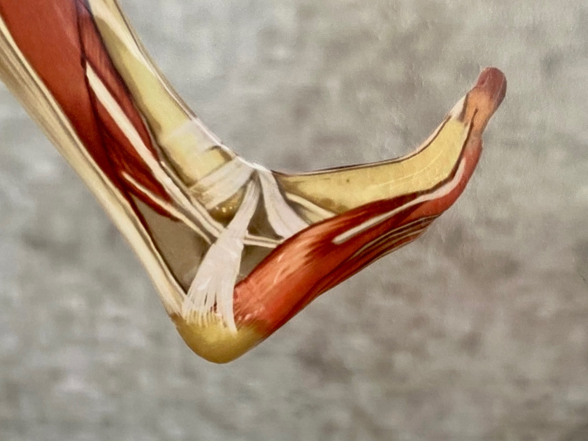 Füße sind unsere Basis