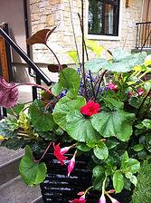 purpleorchid_outdoor1.jpg