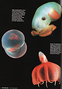 Deep Sea Critters
