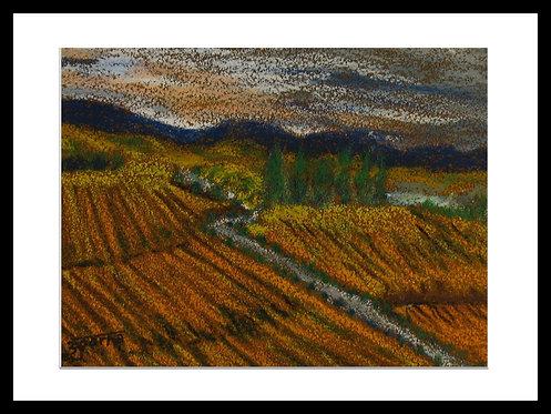 Autumn views from Gloria Ferrer winery