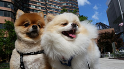 Ginger and Bentley enjoying the sun