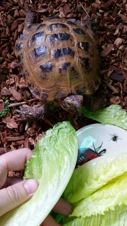 Andre the tortoise