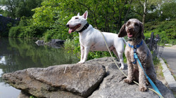 Mick and Rhett on an Adventure Walk