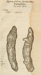 Tumeric from J. Gerard's Herball