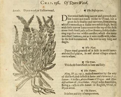 John Gerard 1597