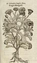 J. Gerard's Herball of 1597