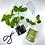 Thumbnail: Mini Herb Gardens
