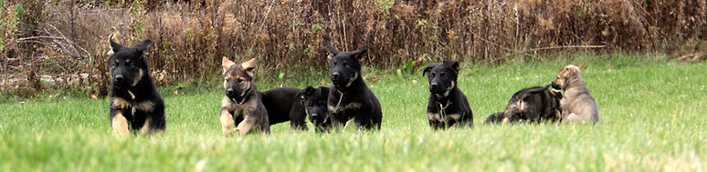 G Litter Group Shot 1_edited.jpg