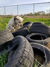 Tire Environmentals