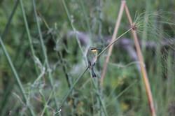 Caprivi Adventures Birding