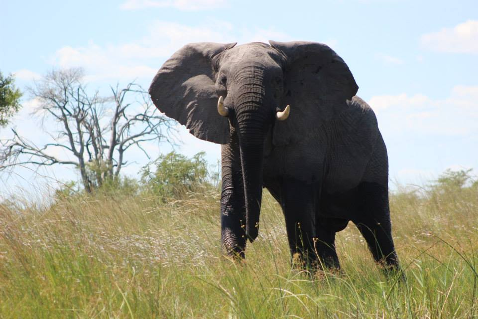 Caprivi Adventures Game Drives