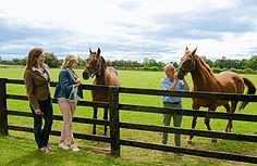 Horses_IrishLegends_Featured.jpg