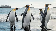 Penguins-pic.jpg