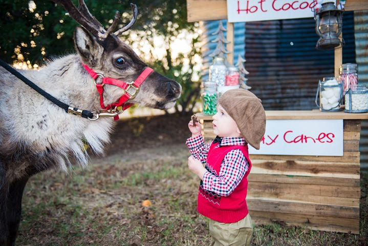 Christmas Mini Session including Santa and Live Reindeer