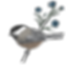 Logo for Lorraine Renee Skuta Art & Biology