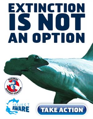 Especialidad PADI aware shark conservation (curso de tiburones)