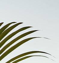 MOUSSES-FOAMS_d.jpg