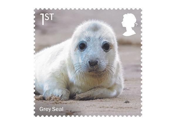 Wild Coasts Stamps Grey Seal.jpg