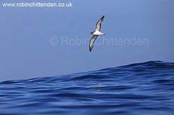Portugal Bird Report October 2015 L