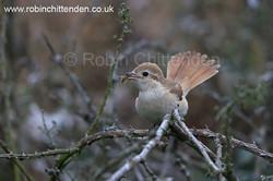 www.birdlineeastanglia.co