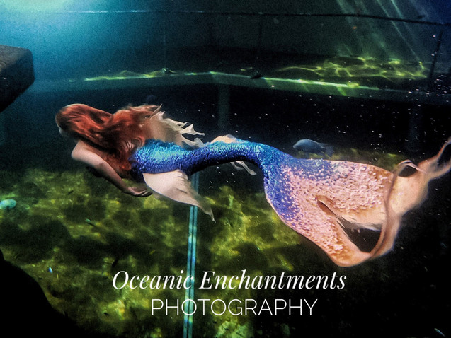 Crédit Photo : Oceanic Enchantment Photography