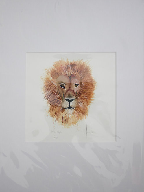 South Africa's Lion