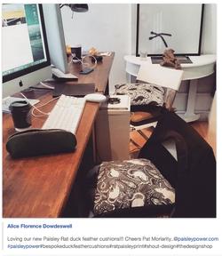 Rat cushions at Shout Design Studio
