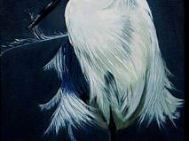 White Egrit o/c 16x12