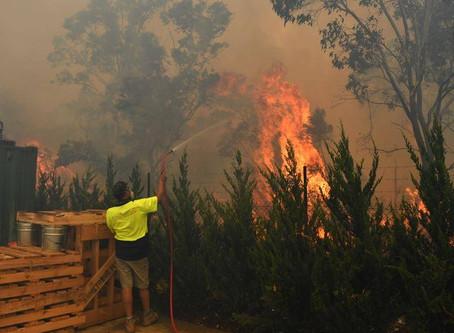 Surviving bushfires and smoke
