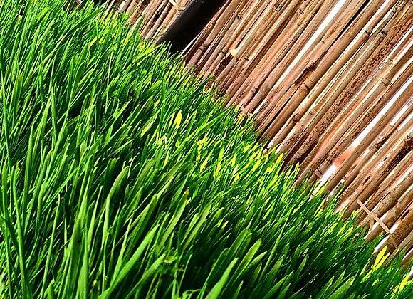 Living Wheatgrass Micros.עלי מיקרו חיים עשב חיטה