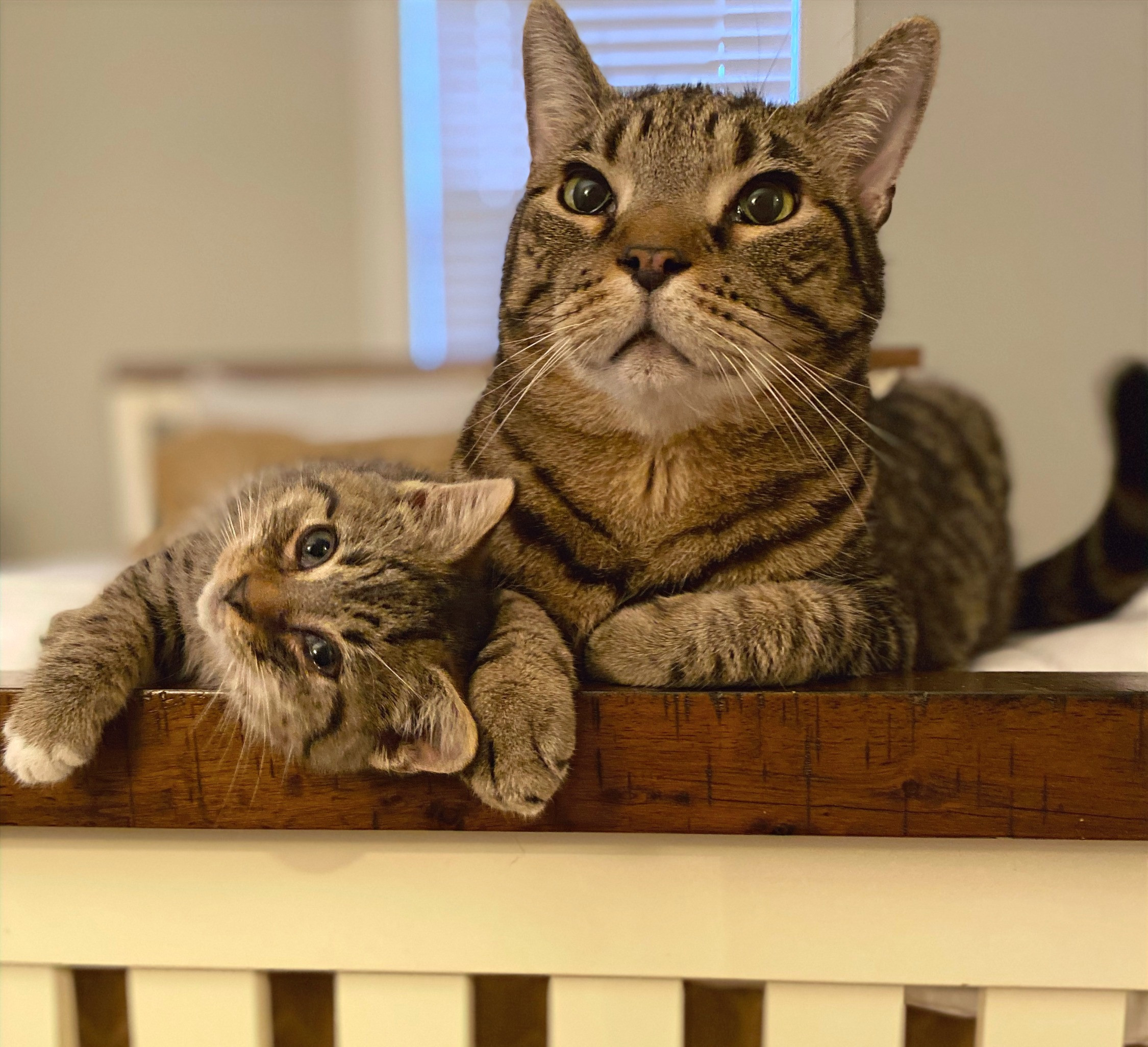 Cat and other critter care