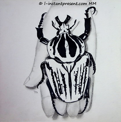 Insecte en main