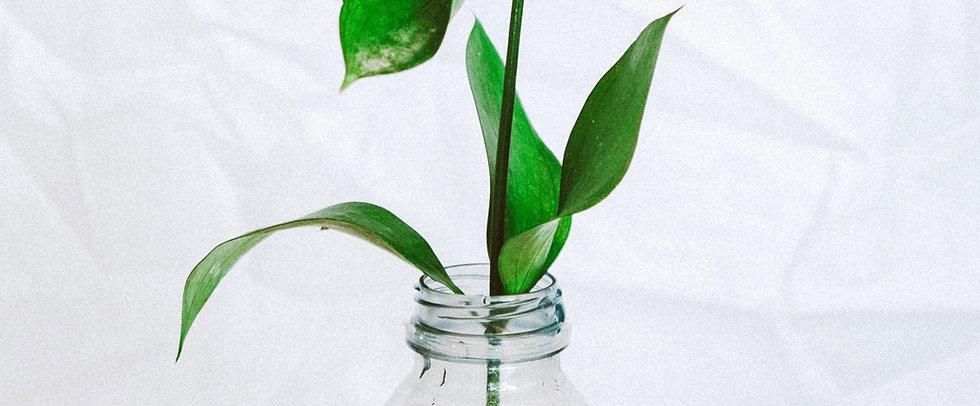 plastic%20photo_edited_edited_edited.jpg