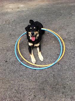 hunde16 003.JPG