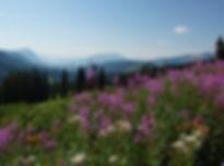 wildflower-1582625_1920.jpg