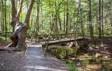 Cataract Falls Nature trail, Gatlinburg TN bridge