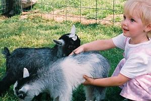 baby goats Smoky Mountain Deer farm