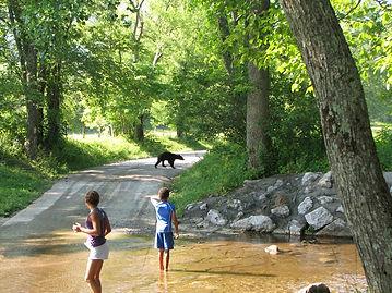 kids watching bear cross road