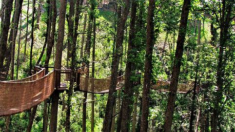 Anakeesta tree canopy Skywalk Gatlinburg view
